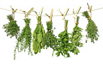 Boost Your Metabolism Using Herbs